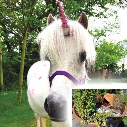 Unicorn-Fairy-Garden-Workshop
